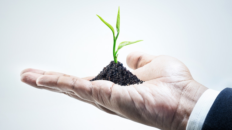 Business Man Holding a Small Growing Plant in His Hand - Investors - AAK
