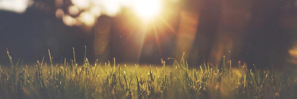 Solstrålar på gräsmatta - Hållbar tillväxt - AAK