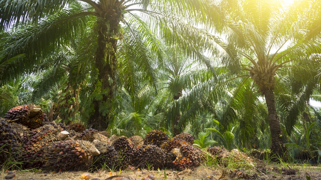 palm trees - Sustainable growth - AAK