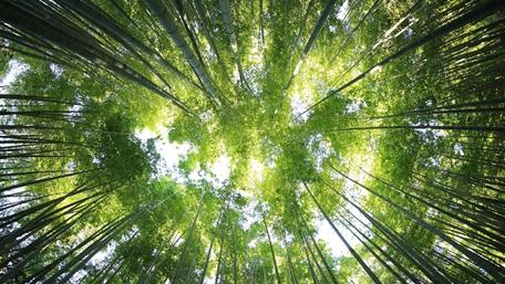 Träd och himmel sedda underifrån - Investerare - AAK