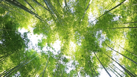 Trees and sky seen from underneath - Investors - AAK