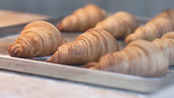 Croissants Laying on an Oven Sheet - Bakery - AAK