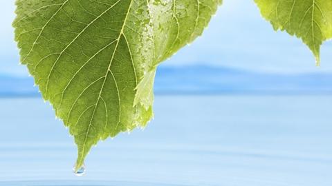 Vatten som droppar ner i havet från ett löv - Technical Products - AAK
