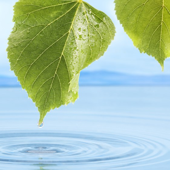 Water dripping from a leaf into the sea - Technical Products - AAK